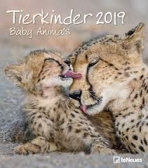 CALENDAR 2019 BABY ANIMALS / TIERKINDER