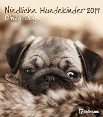 CALENDAR 2019 DINKY DOGS / NIEDLICHE HUNDEKINDER