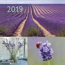 CALENDAR 2019 BEAUTIFUL MOMENTS