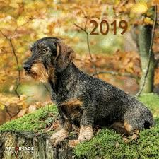 CALENDAR 2019 SAUSAGE DOG