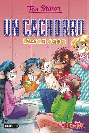 CACHORRO BUSCA CASA, UN
