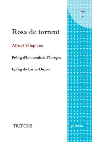 ROSA DE TORRENT